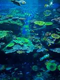 Blurred Landscape Scene of Undersea Coral Reef with Sea Fish Bac. Blurred Beautiful Landscape Scene of Undersea Coral Reef with Sea Fish Background Stock Photo