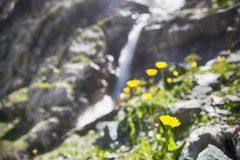Blurred Landscape with Waterfall and flowers. Blurred Landscape with Waterfall and mountains flowers royalty free stock images