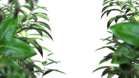 Blurred leafs With Water Drops animated background stock footage