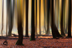 Blurred lines in autumn stock photo