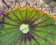 Blurred Lotus leaf  dreamy meditation abstract background Royalty Free Stock Image