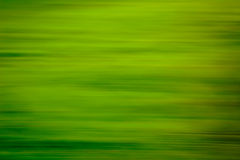 Blurred lush green background Stock Photos