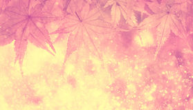 Blurred magical soft pink color autumn leaf background Royalty Free Stock Images