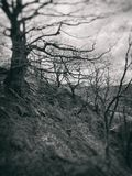 Blurred monochrome dark vintage style image of spooky twisted winter trees at twilight on a steep woodland hill. A blurred monochrome dark vintage style image of stock images