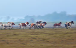 Blurred motion of many galloping  horses Royalty Free Stock Photos