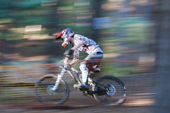 Blurred Mountain Biker. A male downhill Mountain Biker goes down the hill amongst the trees stock photography