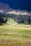 Blurred Mountain Pathway. Lensbaby Shot Royalty Free Stock Photo
