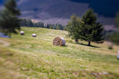 Blurred Mountain Sheaf. Lensbaby Shot Stock Image