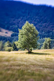 Blurred Mountain Tree. Lensbaby Shot Stock Photos