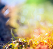 Blurred multicolored nature background with sunshine,light and bokeh Royalty Free Stock Images