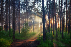 Blurred mystery forest Stock Photography