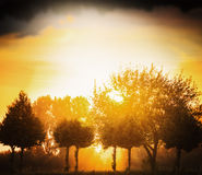 Blurred natural background in autumn trees sunset sky defocus Stock Images