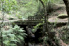 Blurred natural background. Blurred image of an old bridge in the forest. stock photo