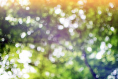 Blurred nature background. Abstract and blurred nature background Stock Image