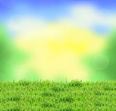 Blurred nature background and green grass Stock Image