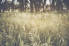 Blurred Nature Background Stock Photography