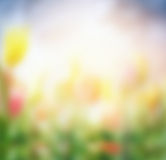 Blurred nature background with summer flowers Royalty Free Stock Photo