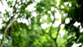 Blurred nature bokeh background stock video footage