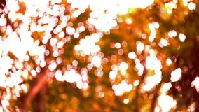 Blurred nature bokeh background stock video