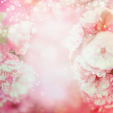Blurred pale pink floral background Stock Photography