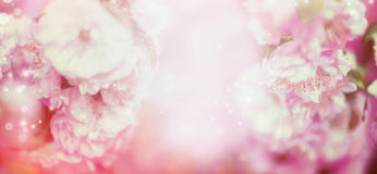 Blurred pale pink floral nature background with bokeh Stock Image