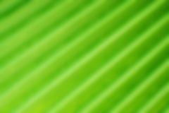 Blurred palm leaf. Abstract background Stock Photography