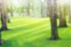 Blurred park, vibrant green natural background Stock Photos