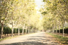 Blurred pathway with wonderful swirly bokeh. Effect by Petzval lens, natural background Stock Photo