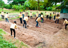 Blurred people are working to dig a earth for prepare to grow ve Stock Image