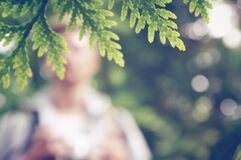 Blurred Person Behind Green Tree Leaf royalty free stock images