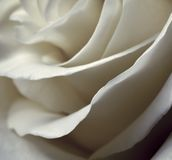 Blurred petals of roses Royalty Free Stock Image