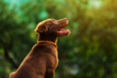 Blurred photo of cute dog look up Royalty Free Stock Photos