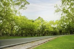 Blurred photo Park walkways with green trees with morning sun. Blurred photo Park walkways with green trees royalty free stock image