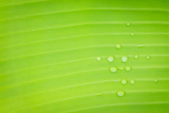 Blurred photo of water drops on leaf in garden Stock Photography