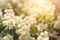 Blurred photo of white flowers Stock Images