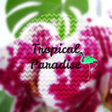 Blurred photographic background and text. Vector illustration. Blurred photographic background with orchid, flamingos and text Tropical paradise Royalty Free Stock Photography
