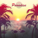 Blurred photographic background and text. Vector illustration. Blurred photographic background with palm trees, flamingos and text Royalty Free Stock Image