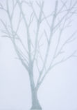 Blurred picture of gray tree on gray background Royalty Free Stock Photography