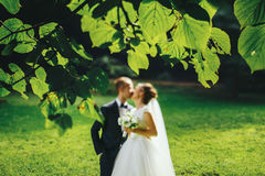 A blurred picture of newlyweds kissing in the green garden Stock Image