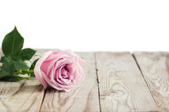 Blurred pink roses on wooden background. Blurred pastel roses on grey wooden background Stock Image