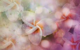 Blurred rain drop and sweet frangipani or plumeria flower shape Royalty Free Stock Photos