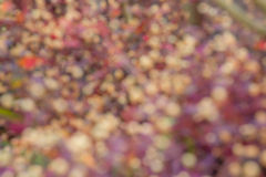 Blurred red and white flower Royalty Free Stock Photo
