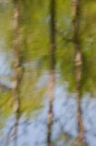 Blurred reflection of trees. And blue sky on water in the river Royalty Free Stock Photos