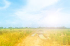 Blurred rice field and blue sky Royalty Free Stock Photography