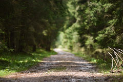 Blurred road perspective Royalty Free Stock Photo