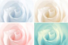 Blurred roses Stock Photo