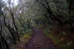 Blurred rotation: Trail through a dark wet forest.