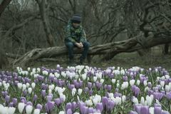 A blurred sad boy sitting on a fallen tree in dark park, many crocus flowers in front of him - he is apathic, dismal, cheerless royalty free stock photo