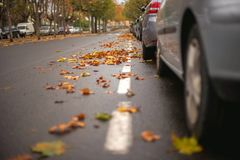 Parked cars on one side and a road with focused autumn leaves at the other. Stock Images