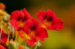 Blurred seasonal flowers with defocussed background Stock Images